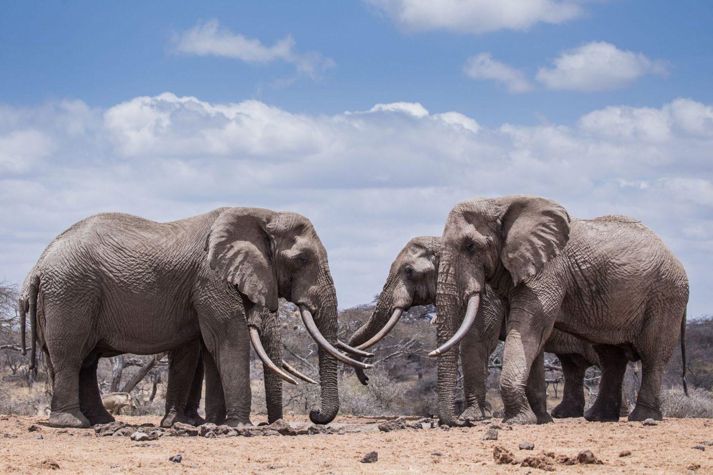 Elephants © Jeremy Goss