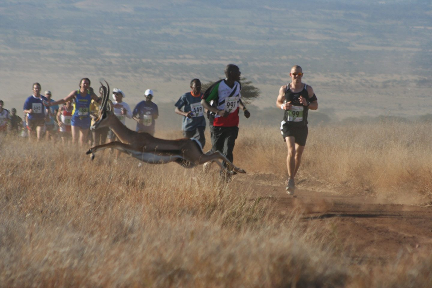 Safaricom Marathon Runners and Impala.  With Thanks to Emma Craig