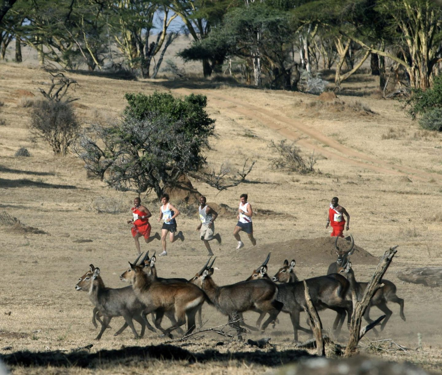 Safaricom Marathon Running with Waterbuck