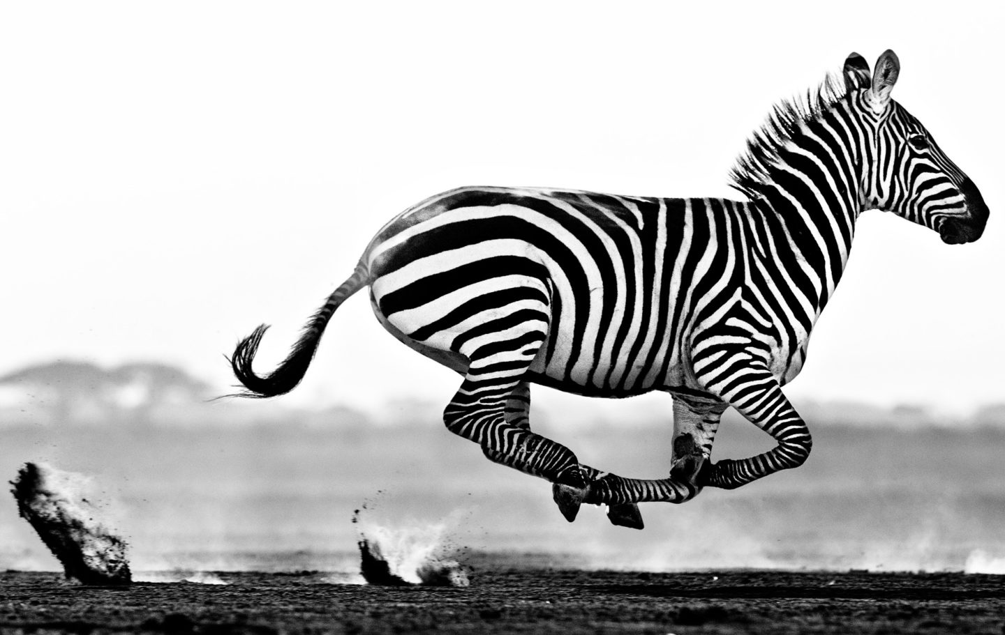 Desert Flight © David Yarrow