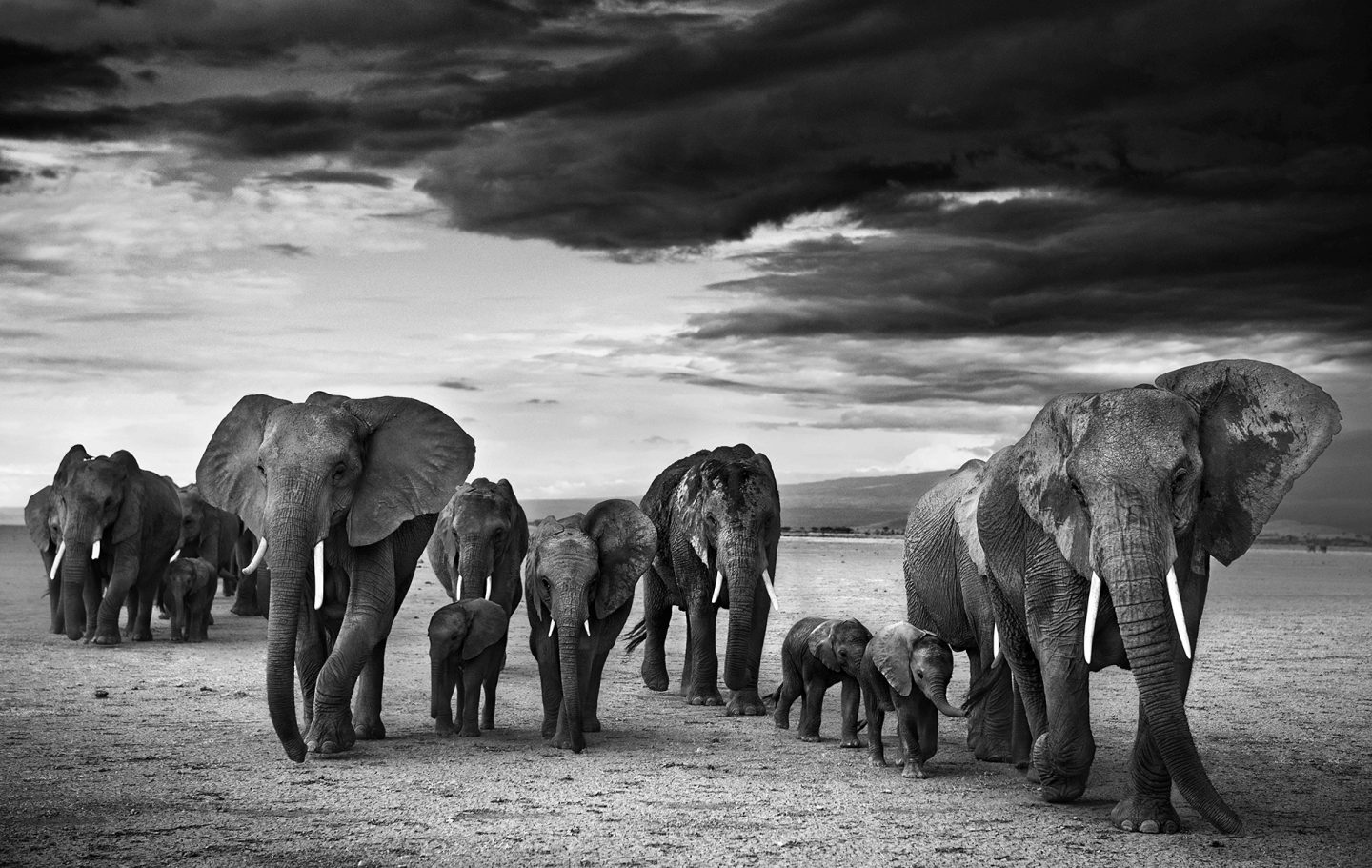 Family © David Yarrow