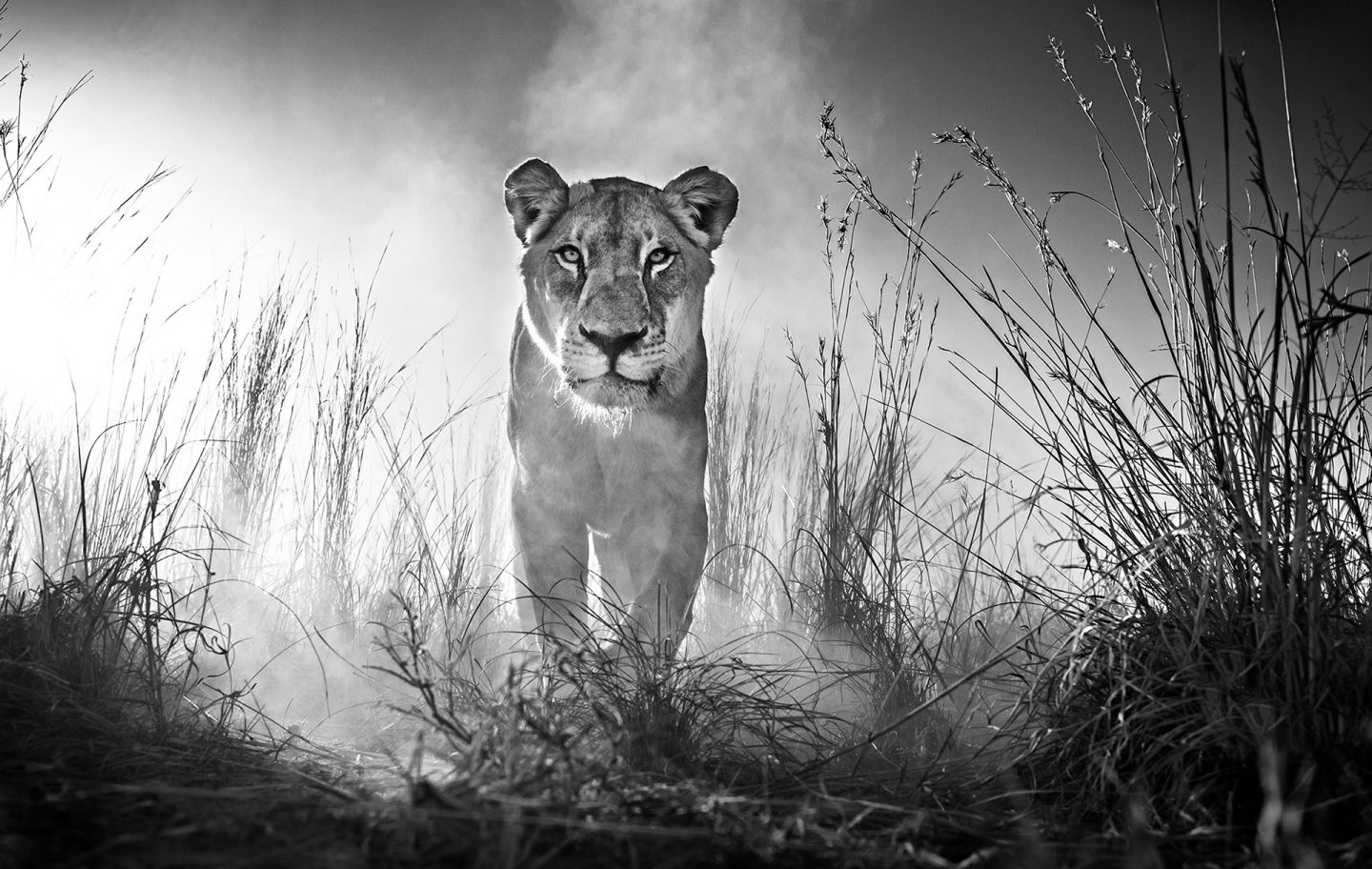 Gladiator © David Yarrow