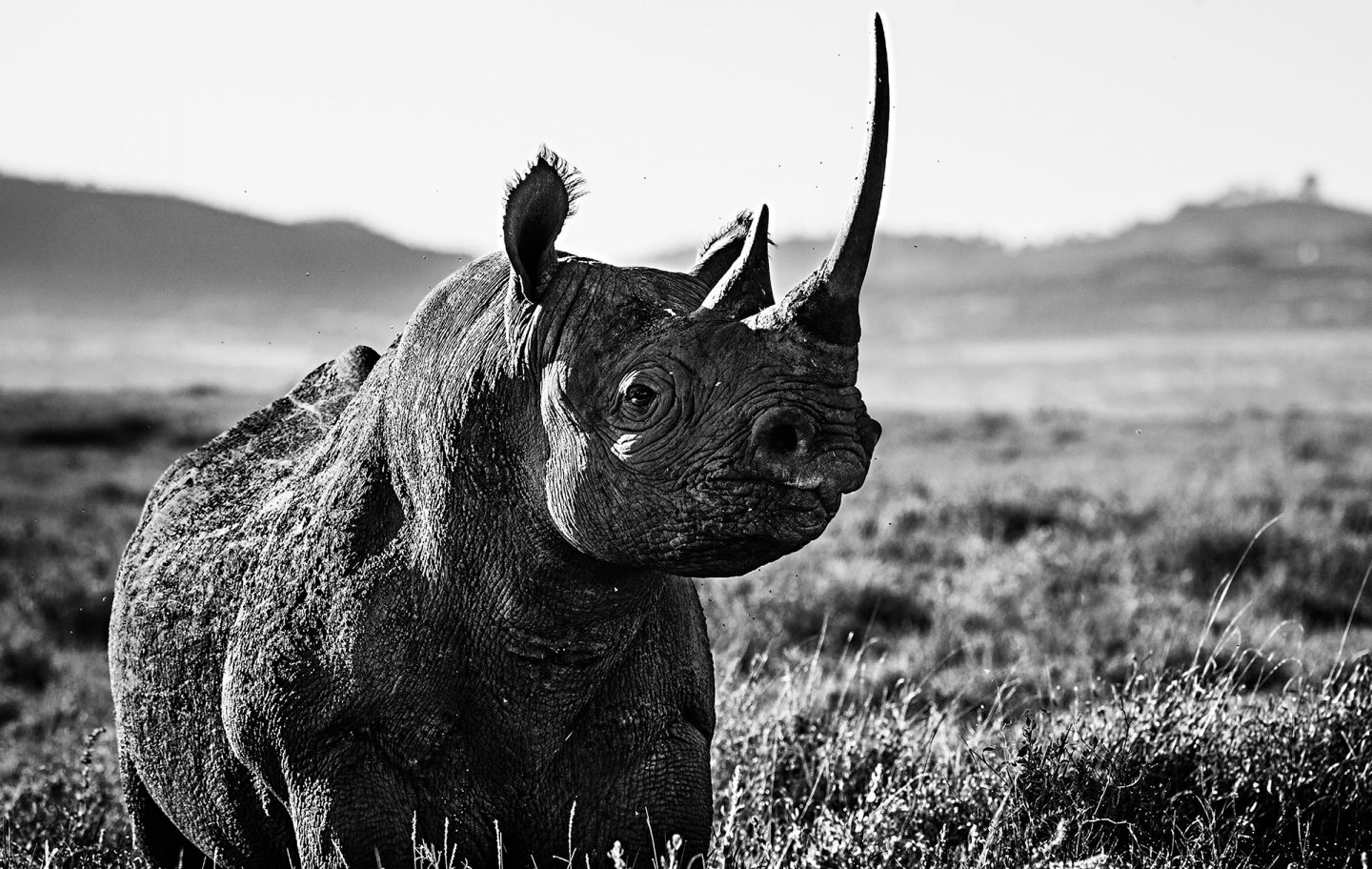 Kifaru © David Yarrow