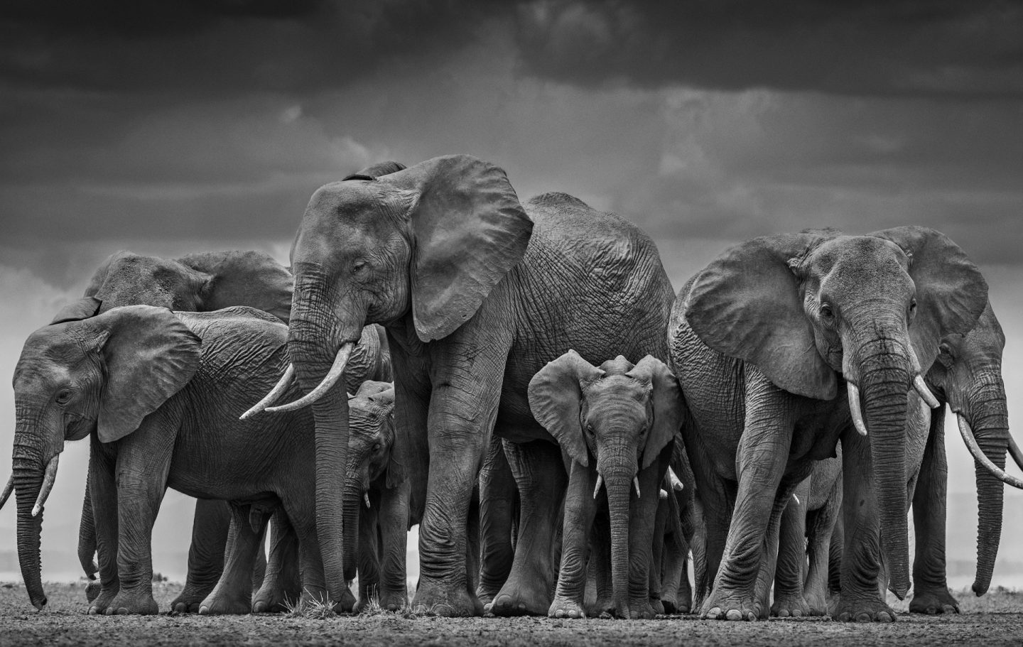 The Circle of Life © David Yarrow