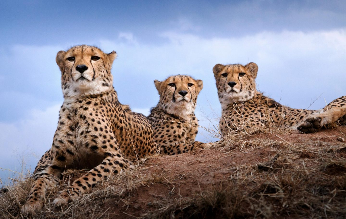Tusk Trust - Cheetah Conservation Fund