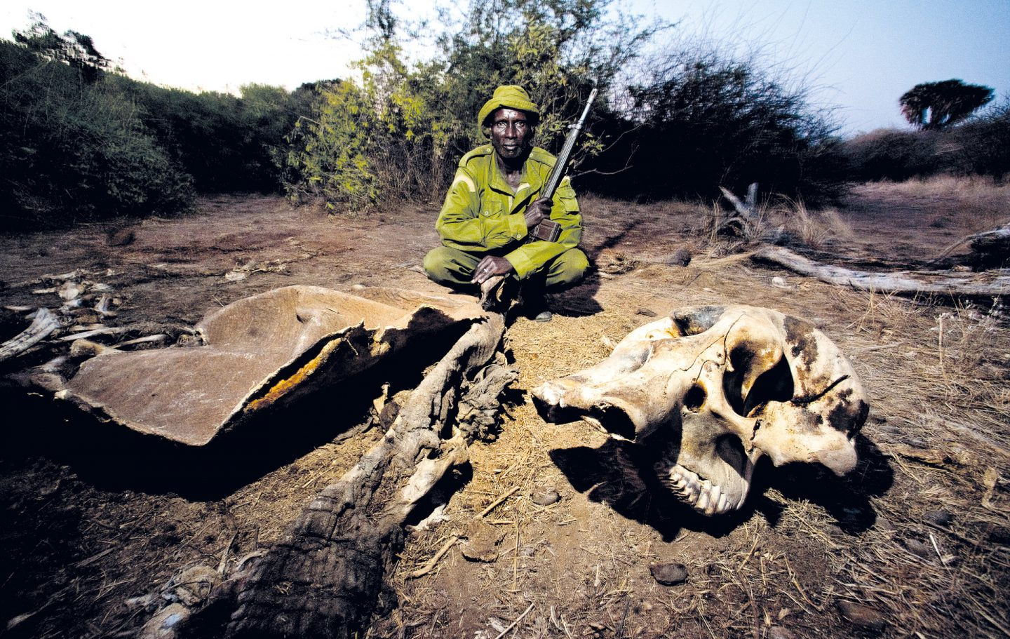 Remains of an elephant killed by poachers, close to Serolipi River, Sera.