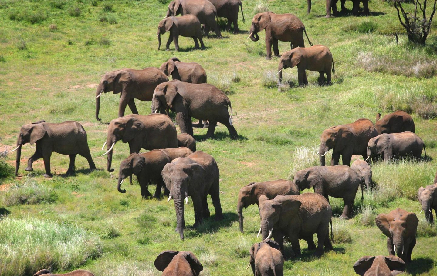 Elephants Roaming on Lewa Wildlife Conservancy © Abbie Trayler-Smith - Telegraph Christmas Charity Appeal