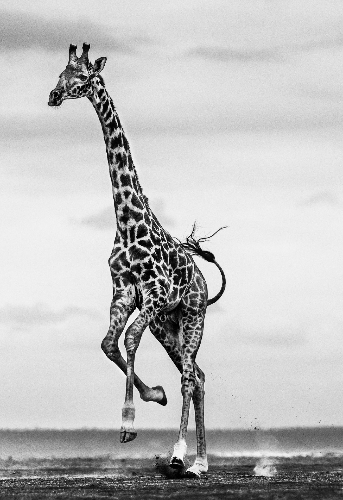Hoof It © David Yarrow