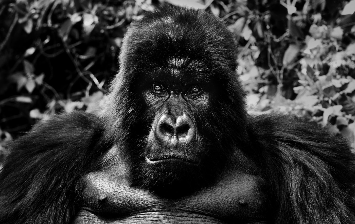 King Kong © David Yarrow