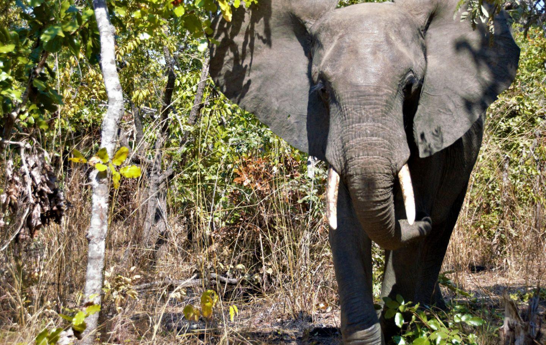 Tusk Trust - Lilongwe