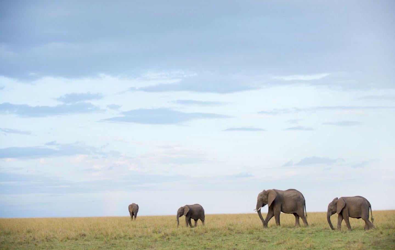 Tusk Trust - Mara Elephant Project