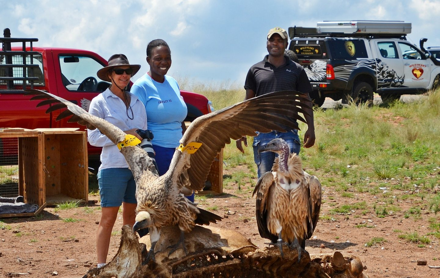 Tusk Trust - Vulture Conservation Release