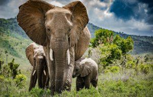 Tusk Trust - Borana Conservancy © Brittany Mumma