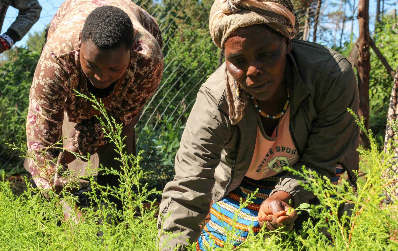 Tusk Trust - Ngare Ndare Tree Planting