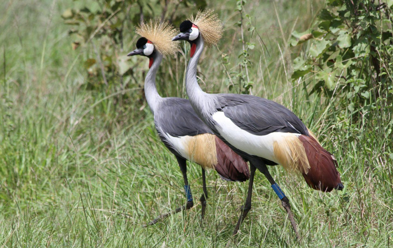 Tusk Trust - Rwanda Wildlife Conservation Association 2