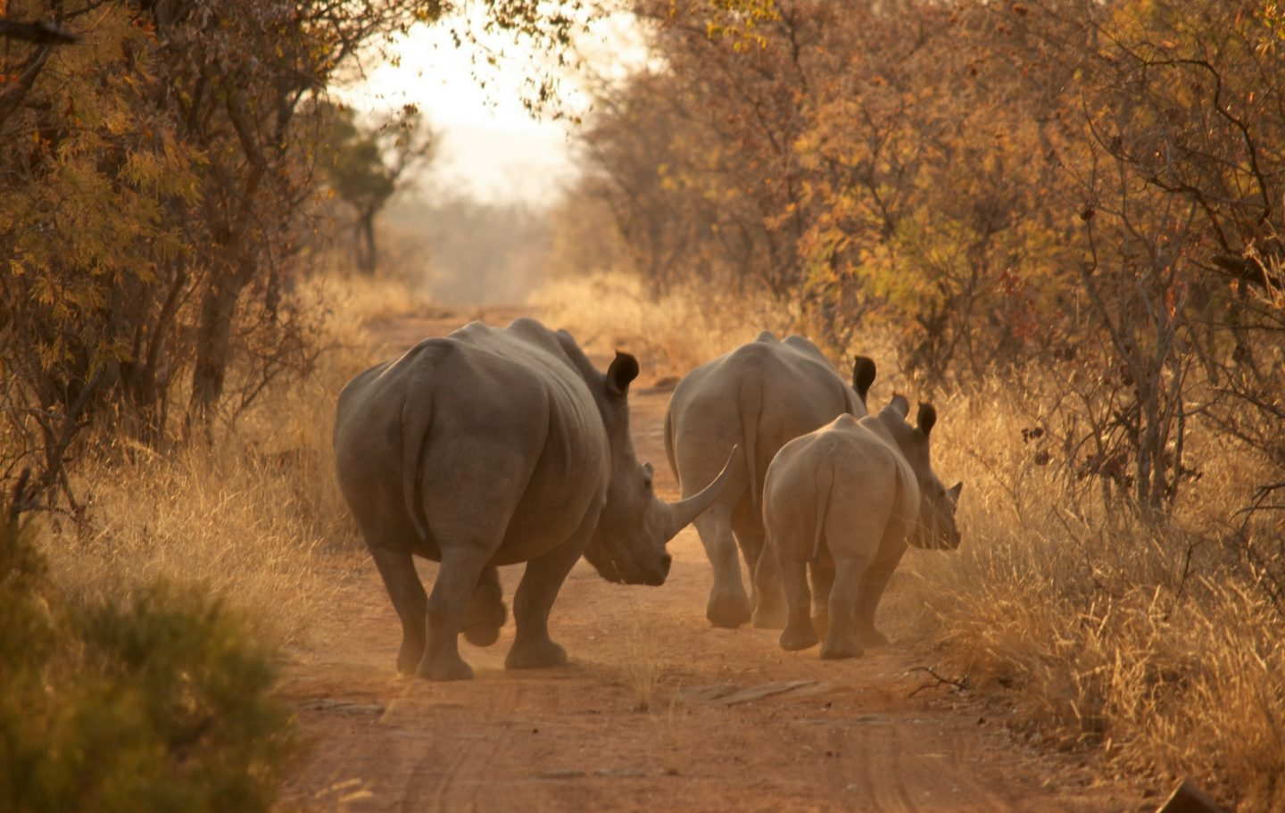 Tusk Trust - Save the Waterberg Rhino - PC Wild Revolution 2