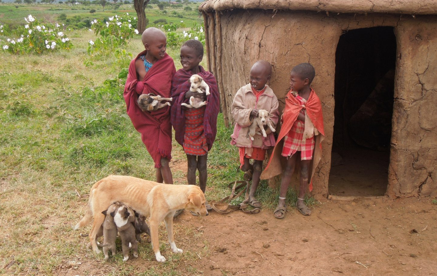 Tusk Trust - Serengeti Rabies Vaccination Project