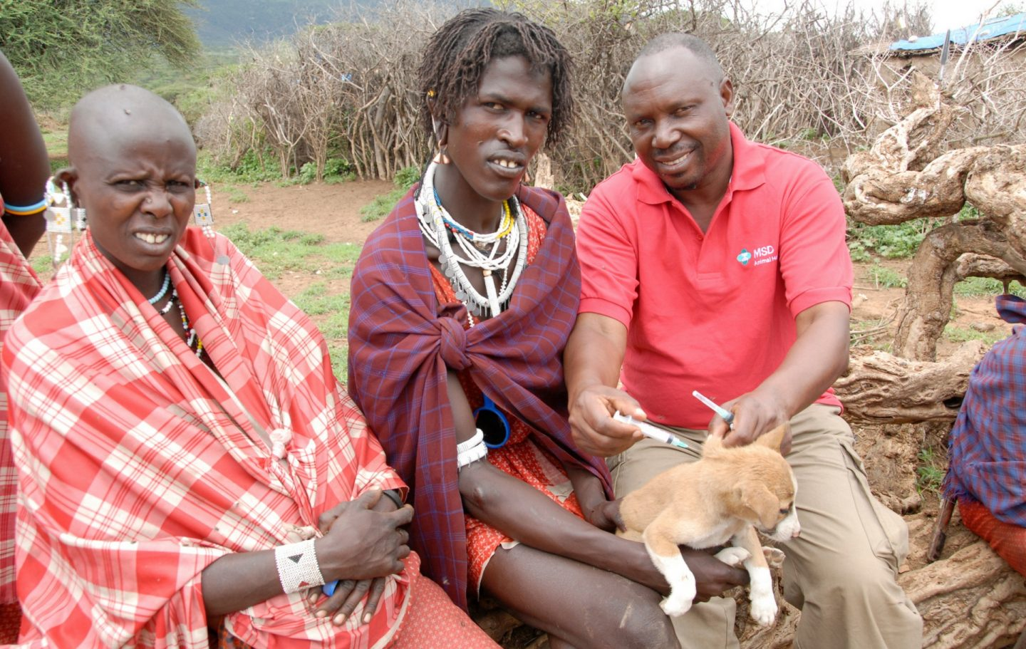 Tusk Trust - Serengeti Rabies Vaccination Project 2