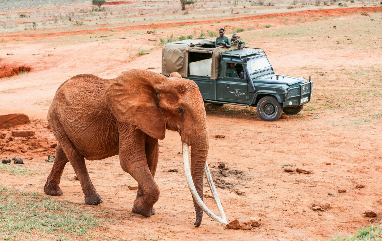 Tsavo Trust, Kenya