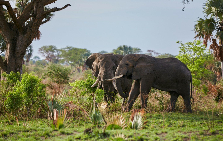 Tusk Trust - Uganda Conservation Fund