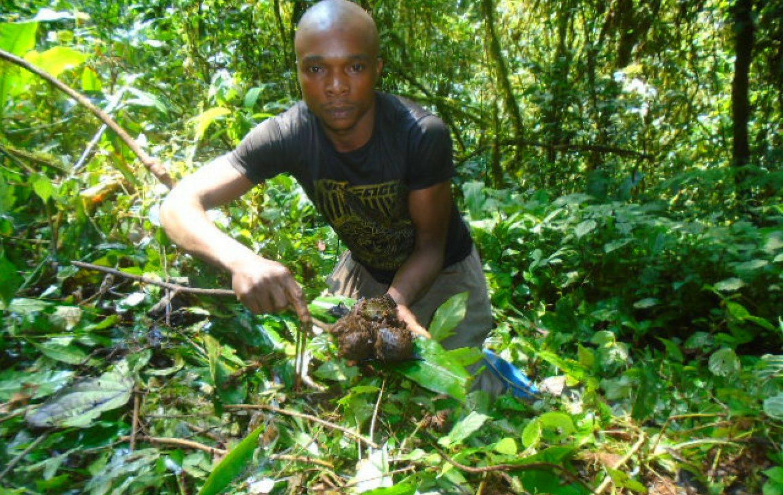 Tusk Trust - Walikale Gorilla Project