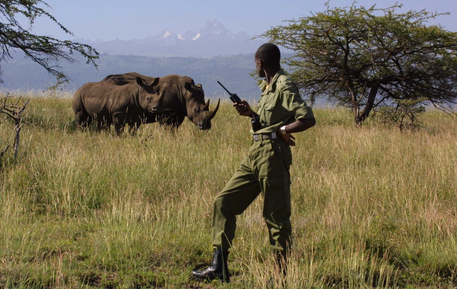 Poaching & The Illegal Wildlife Trade