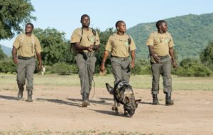CLZ Rangers & Tracker Dog