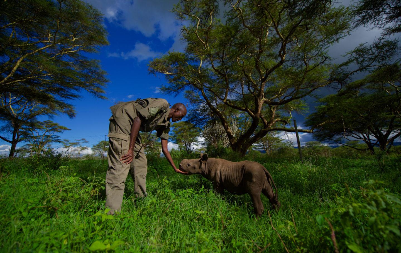 Lewa Wildlife Conservancy rescued rhino by Martin Buzora