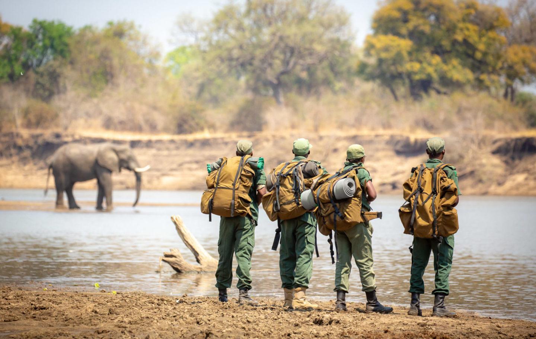CSL Rangers & Elephant