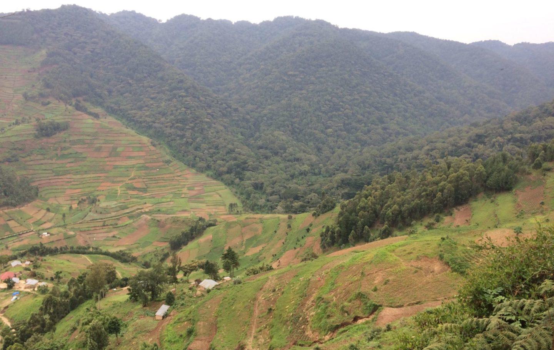 Bwindi park boundary