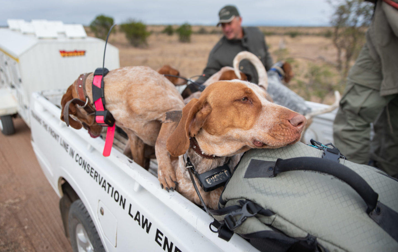 SAWC Dog Unit