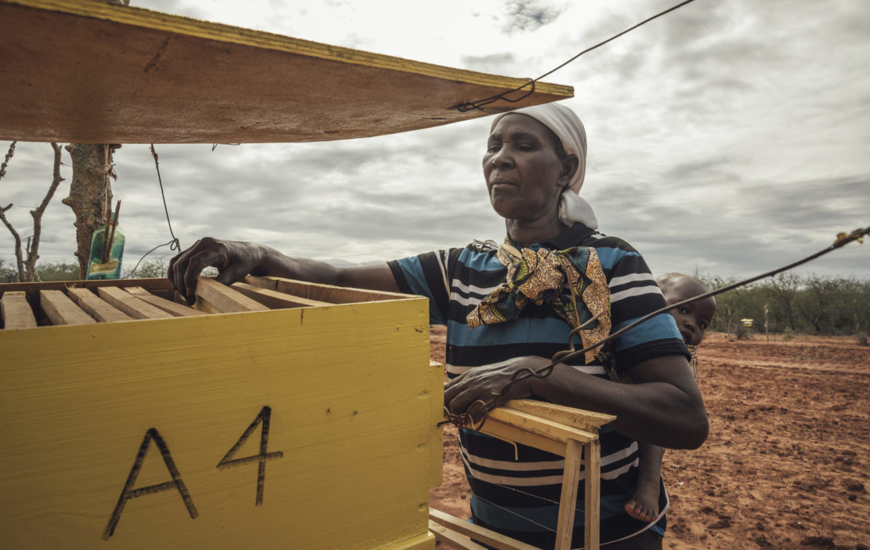 Beehive fences - Tsavo Trust