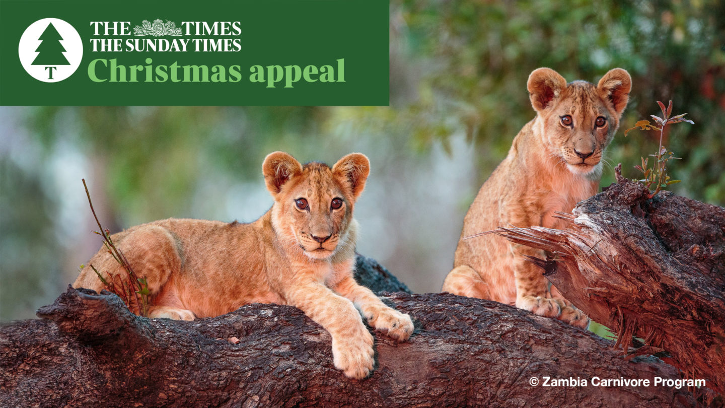 Times Christmas Appeal