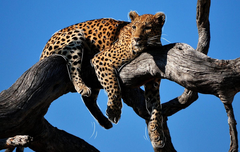 Waterbear Network Leopard